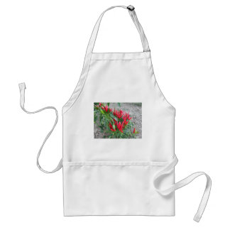 Red peppers hanging on the plant standard apron