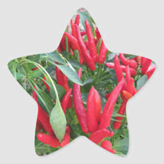 Red peppers hanging on the plant star sticker