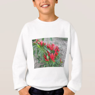Red peppers hanging on the plant sweatshirt