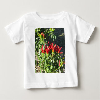 Red peppers hanging on the plant . Tuscany, Italy Baby T-Shirt