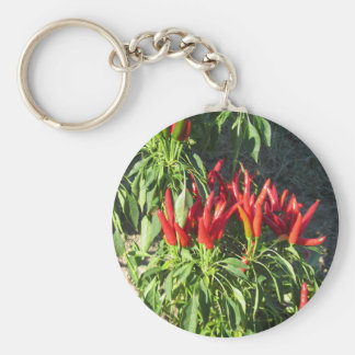 Red peppers hanging on the plant . Tuscany, Italy Keychain