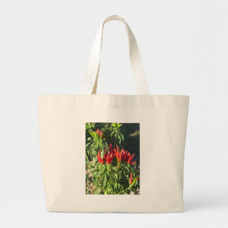 Red peppers hanging on the plant . Tuscany, Italy Large Tote Bag