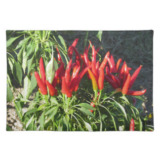 Red peppers hanging on the plant . Tuscany, Italy Placemat