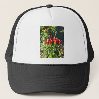 Red peppers hanging on the plant . Tuscany, Italy Trucker Hat