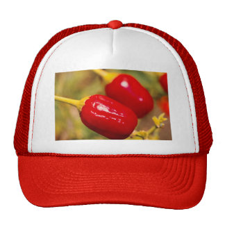 Red Peppers Trucker Hat