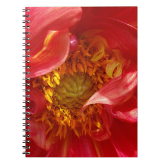 red petals spiral notebooks