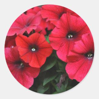 Red petunia flowers classic round sticker
