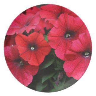 Red petunia flowers plate