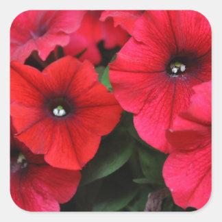 Red petunia flowers square sticker