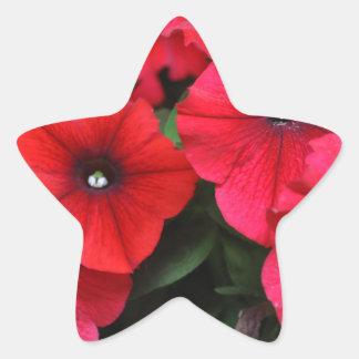 Red petunia flowers star sticker