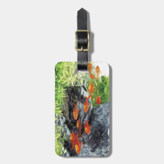 Red phantom tetras luggage tag