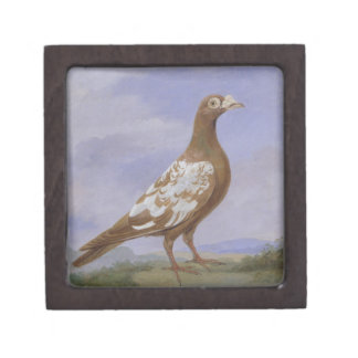 Red Pied Carrier Pigeon (oil on canvas) Premium Gift Box