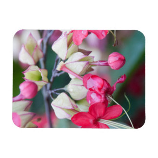 Red Pink and White Tropical Flowers Rectangular Photo Magnet