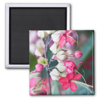 Red Pink and White Tropical Flowers Square Magnet