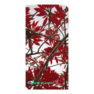 red poinsetia customized photo card