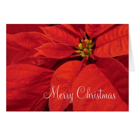 Red Poinsetta Christmas Card