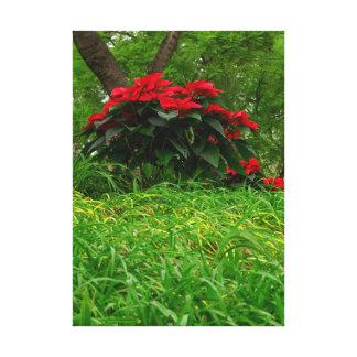 Red Poinsettia Canvas Print