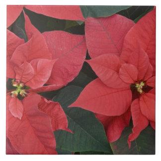 Red Poinsettia Detail (Euphorbia pulcherrima) Ceramic Tiles