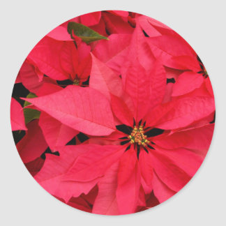 Red Poinsettia Flowers Floral Holiday Greetings Round Sticker