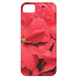 Red  Poinsettia iPhone 5 Cases
