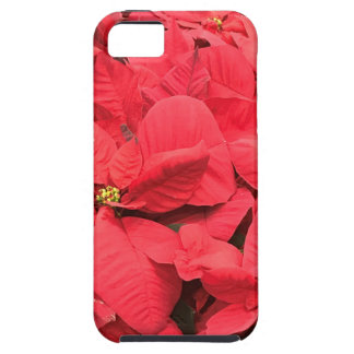 Red  Poinsettia iPhone 5 Covers