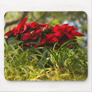 Red Poinsettia Mouse Pad