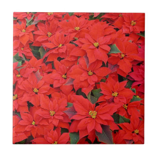 Red Poinsettias I Christmas Holiday Floral Photo Tiles