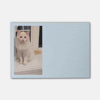 Red Point Ragdoll Cat Post It Notes