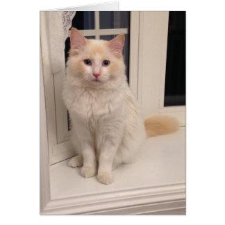 Red Point Ragdoll Cat - Sitting Pretty Card