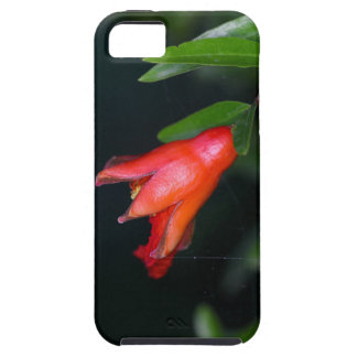 Red pomegranate flower (Punica granatum) on a tree iPhone 5 Cases