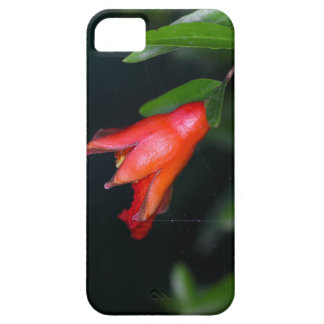Red pomegranate flower (Punica granatum) on a tree iPhone 5 Cover