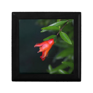 Red pomegranate flower (Punica granatum) on a tree Trinket Boxes