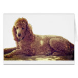 RED POODLE AT REST GREETING CARD