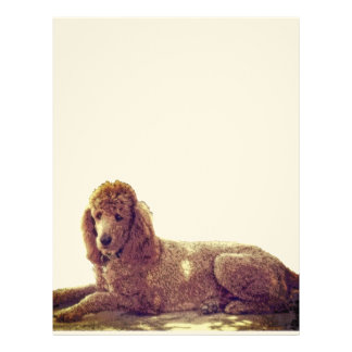 RED POODLE AT REST LETTERHEAD