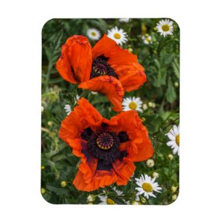 Red poppies and white daisies fridge magnet