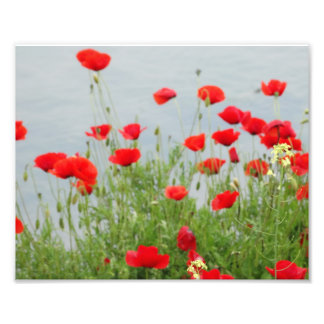 Red Poppies at the sea Photo Print
