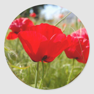 RED POPPIES IN THE FIELD PAPER GOODS CLASSIC ROUND STICKER