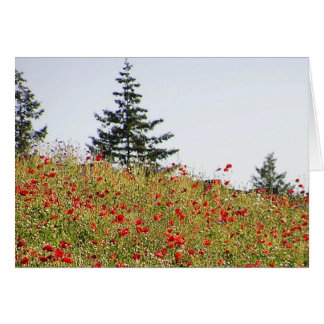 Red Poppies on a hillside card