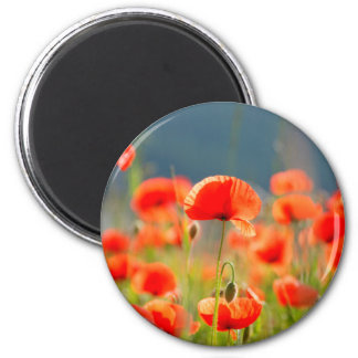 Red Poppies Poppy Flowers Blue Sky 2 Inch Round Magnet