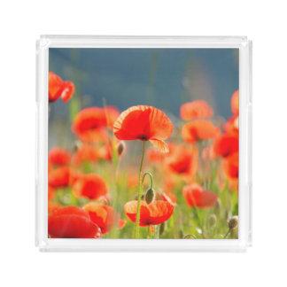 Red Poppies Poppy Flowers Blue Sky Acrylic Tray