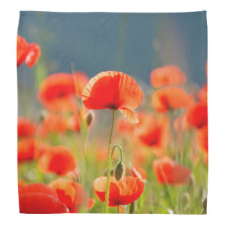Red Poppies Poppy Flowers Blue Sky Bandana