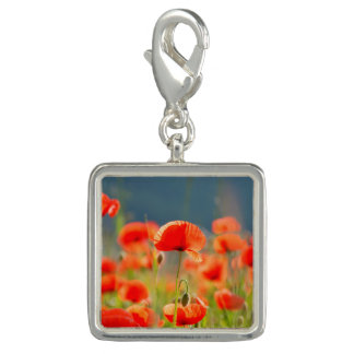 Red Poppies Poppy Flowers Blue Sky Charm