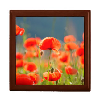 Red Poppies Poppy Flowers Blue Sky Gift Box