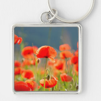 Red Poppies Poppy Flowers Blue Sky Silver-Colored Square Keychain