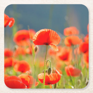 Red Poppies Poppy Flowers Blue Sky Square Paper Coaster