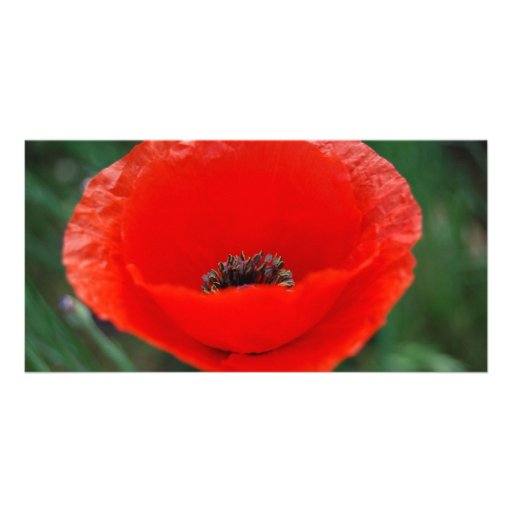Red poppy and meaning photo cards