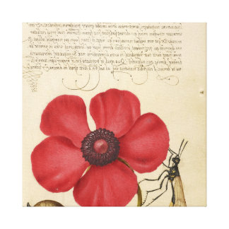 Red Poppy And The Bug Canvas Print