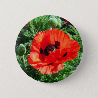 Red poppy - Button