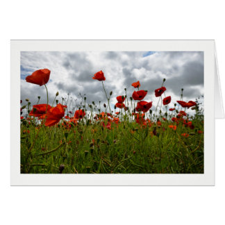 Red Poppy Field, Dorset Card