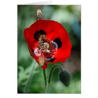 Red Poppy Flower - Bee Invasion Card
